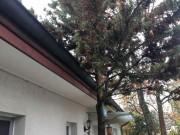 Dachrinne Steildach Aschwanden AG Nänikon Uster Dachunterhalt Service Dachservice Dach kaputt verstopft defekt Hanspeter Sahli